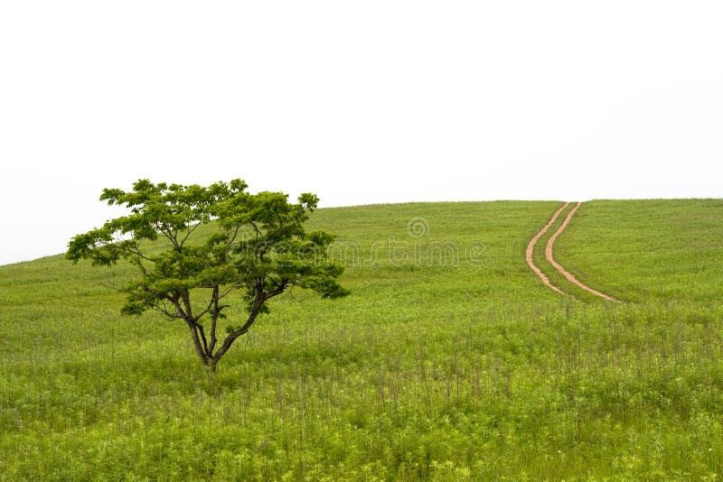 Valle con l'albero ed il vicolo fotografie stock