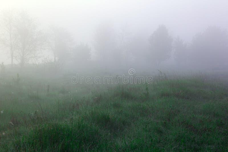 Valle con le siluette degli alberi e dell'erba verde coperte di nebbia immagine stock