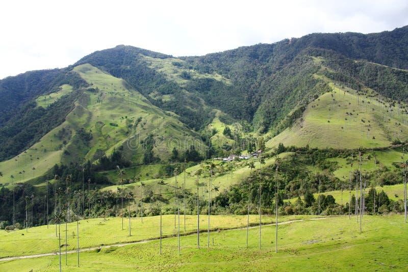 Valle de Cocora. fotos de archivo