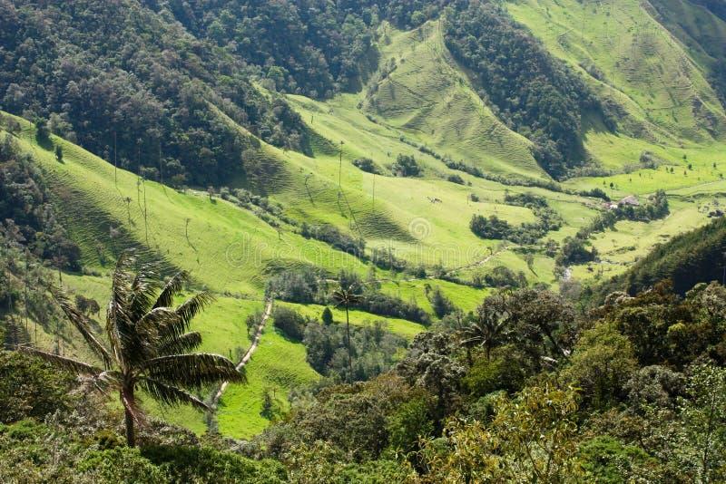 Valle de Cocora, parque natural de Colombia imagen de archivo libre de regalías