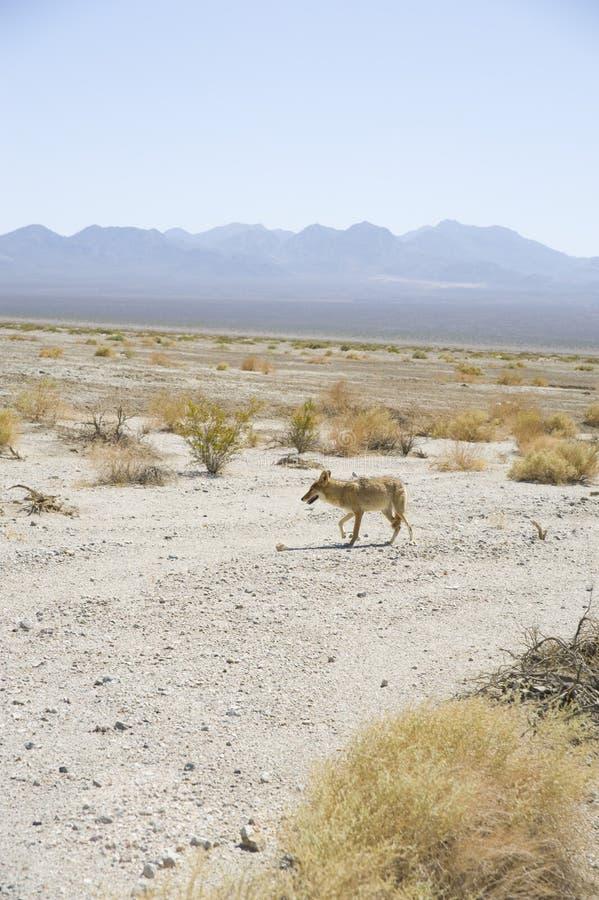 Valle de CoyoteDeath foto de archivo