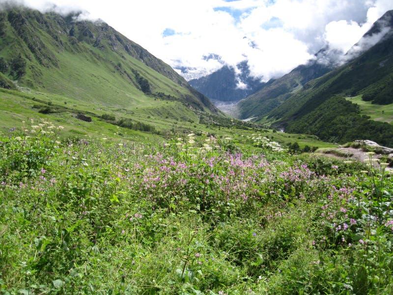 Valle de flores imagenes de archivo