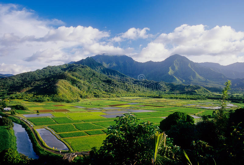 Valle de Hanalei, Kauai fotografía de archivo