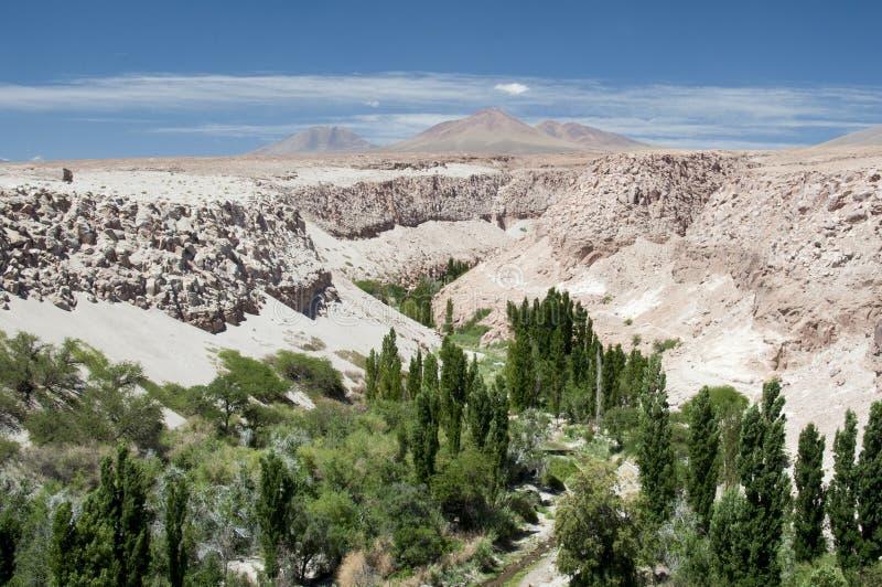 Valle de Jerez, Atacama, Чили стоковые фотографии rf
