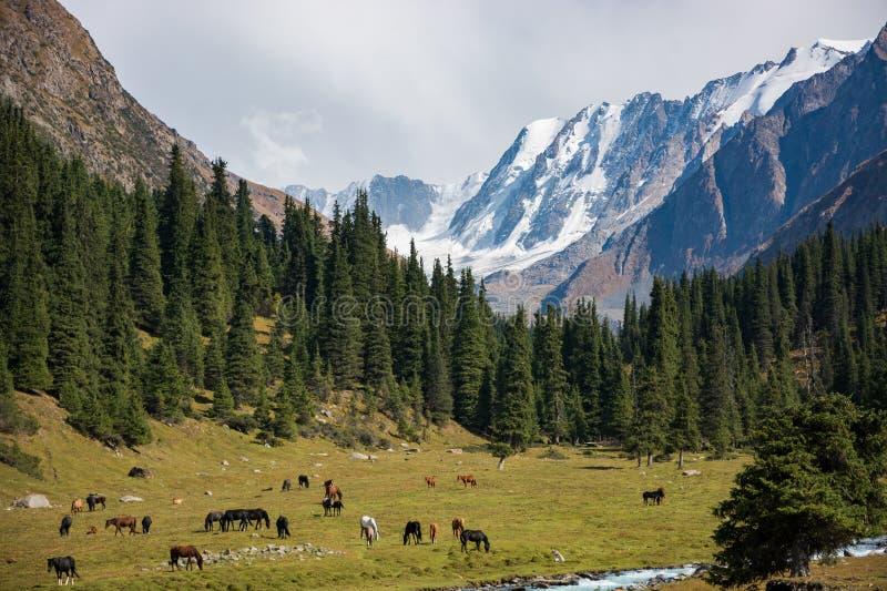 Valle de la montaña con los caballos imagen de archivo libre de regalías
