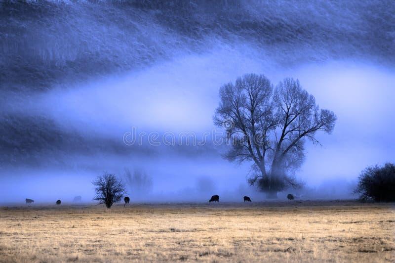 Valle de la niebla foto de archivo libre de regalías