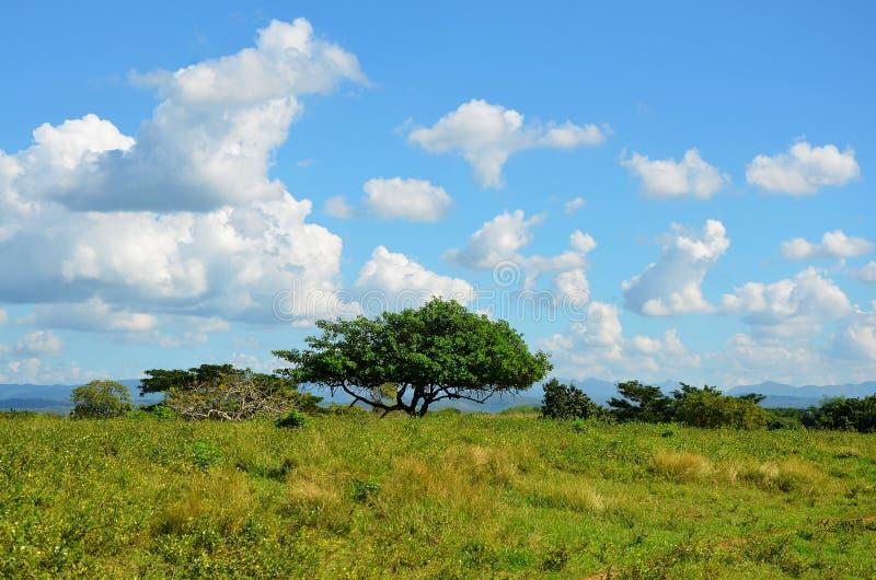 Valle de Los Ingenios; Kuba lizenzfreies stockfoto