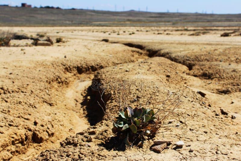 Valle de los volcanes del fango y de la cama de río seca en el valle de los volcanes del fango Una sola planta intenta sobrevivir foto de archivo libre de regalías