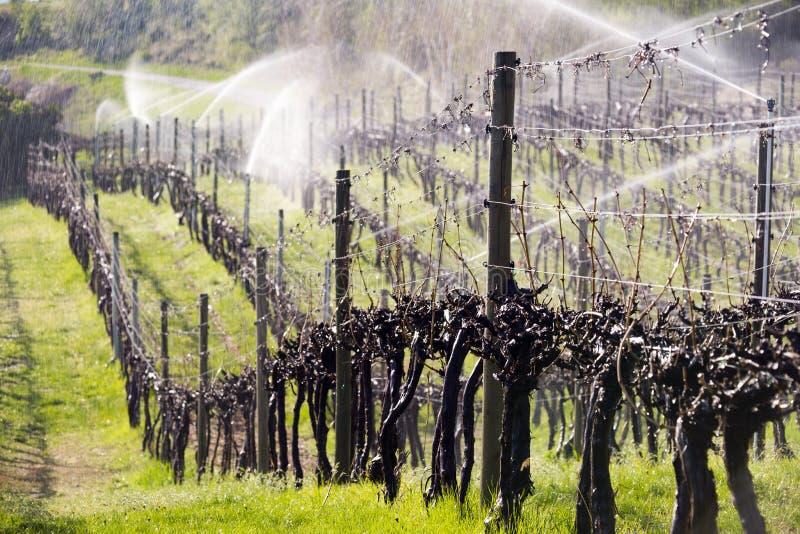 Valle de Okanagan del viñedo de la regadera de la irrigación imagen de archivo libre de regalías