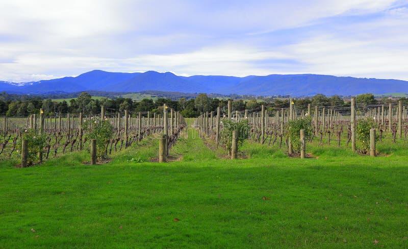 Valle de Yarra imagen de archivo