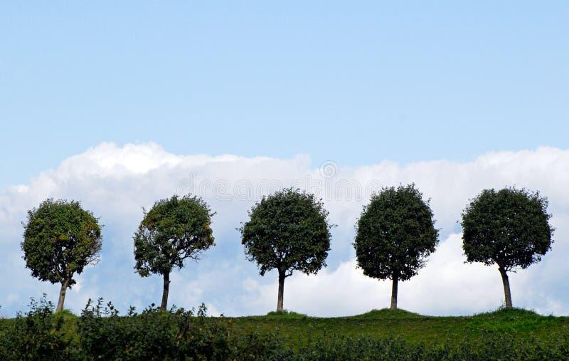 Valle degli alberi in Peterhof. immagini stock libere da diritti