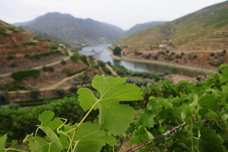 Download Valle del Duero imagen de archivo. Imagen de valle, douro - 41909375