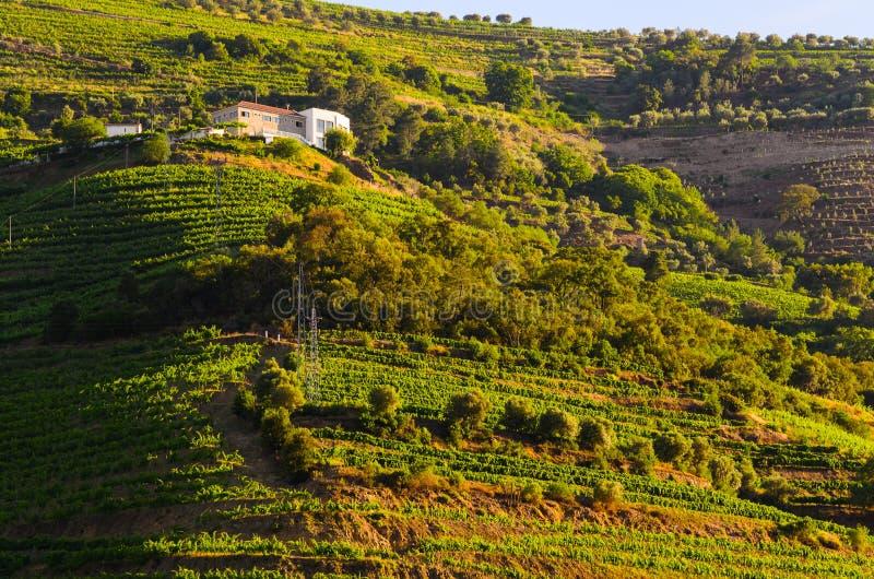 Valle del Duero del río, Portugal fotografía de archivo