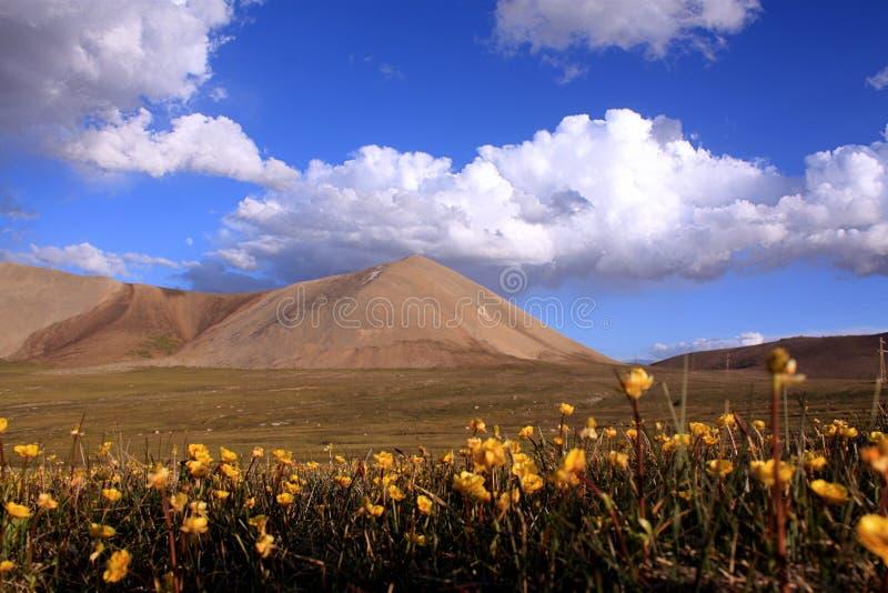 Valle del fiore delle montagne selvagge del Kirghizistan fotografia stock