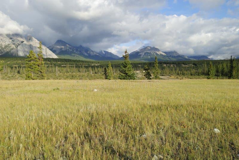 Valle del río de Saskatchewan en Rockies canadienses imagen de archivo