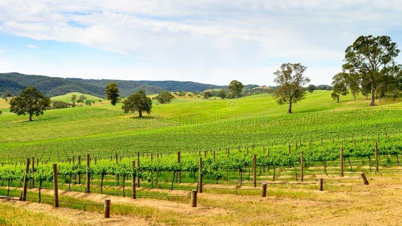 Valle del vino in Barossa fotografia stock
