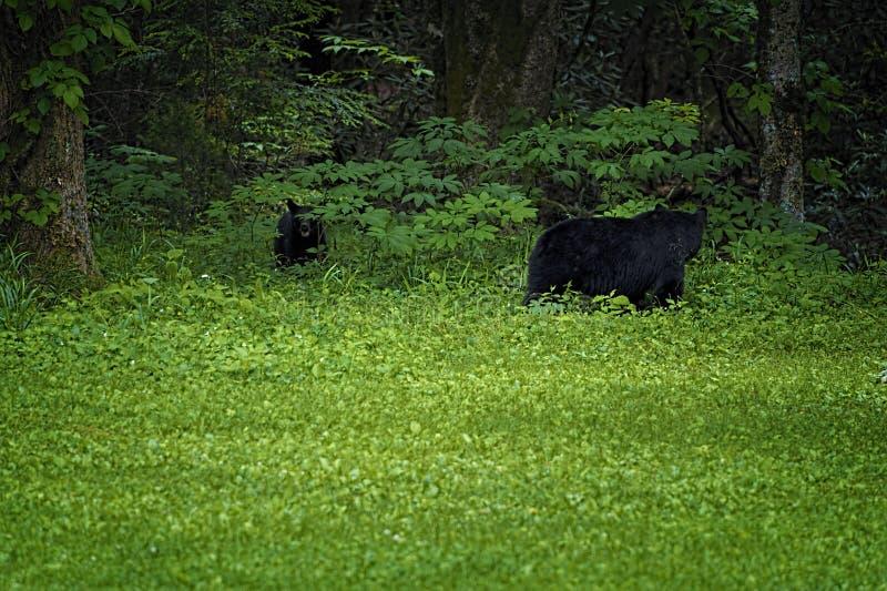 Valle della baia di Cades in Tennessee Smoky Mountains immagine stock libera da diritti