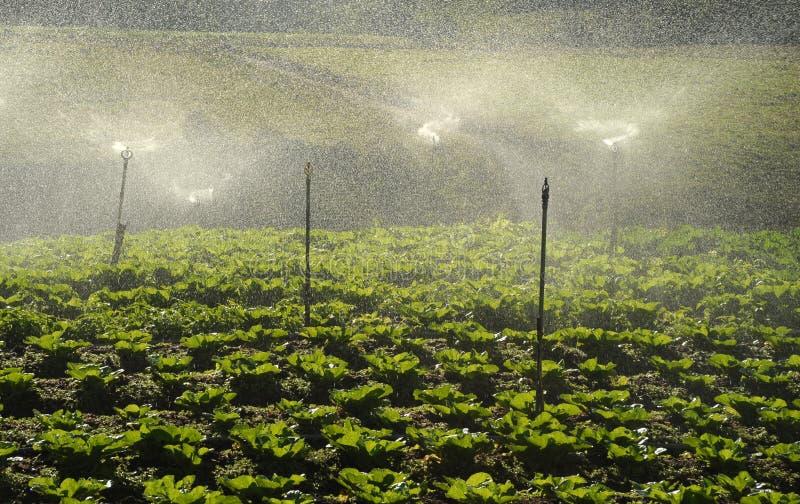 Valle di agricoltura vicino alla montagna di Kinabalu immagini stock