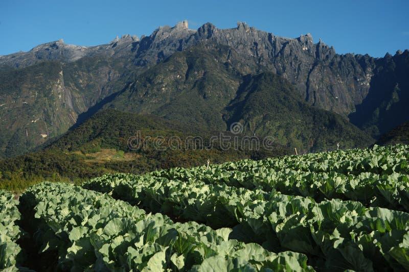 Valle di agricoltura vicino alla montagna di Kinabalu fotografie stock