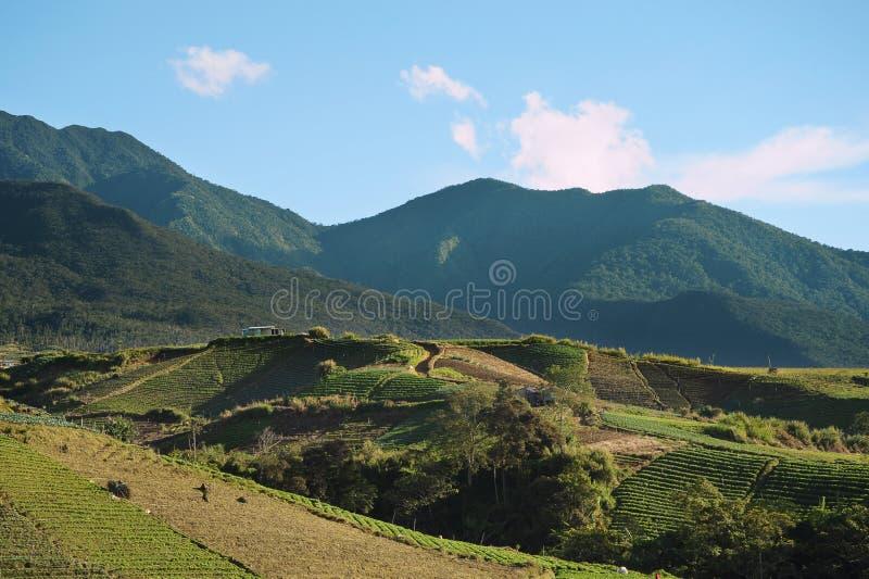 Valle di agricoltura vicino alla montagna di Kinabalu fotografia stock