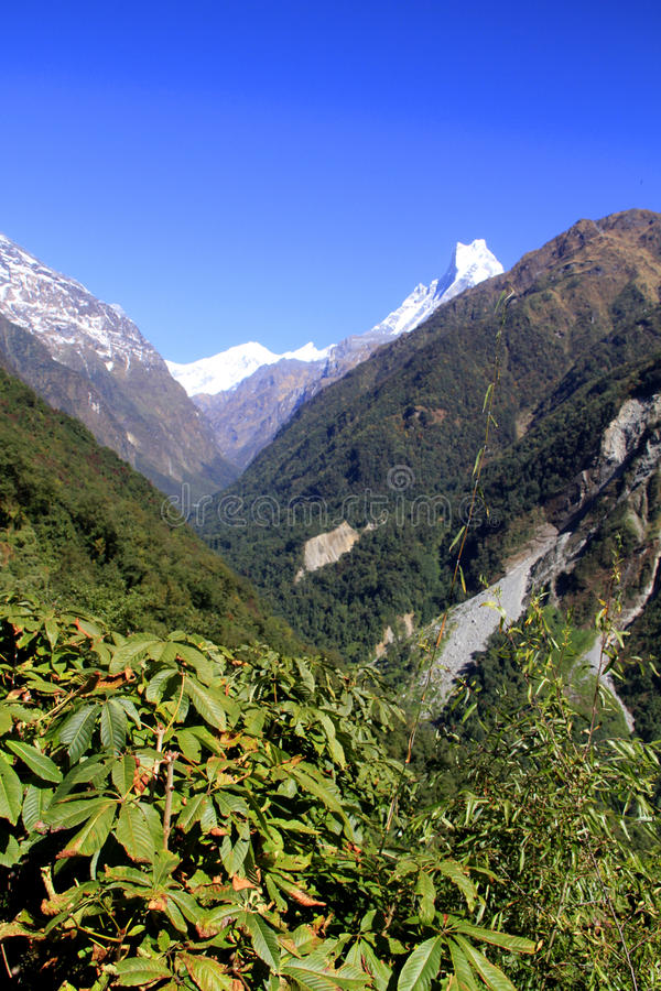 Valle di Annapurna con Machapuchare e il rhododendro fotografie stock libere da diritti