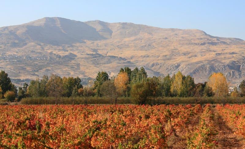 Valle di Beqaa, Libano fotografia stock