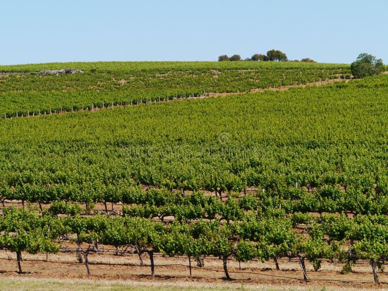 Valle di Clare in Australia del sud fotografia stock libera da diritti