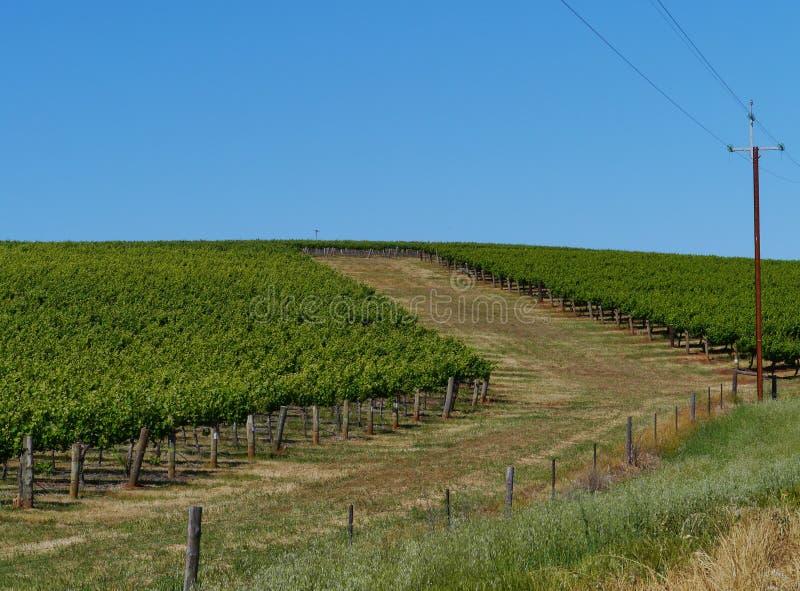 Valle di Clare in Australia del sud immagini stock