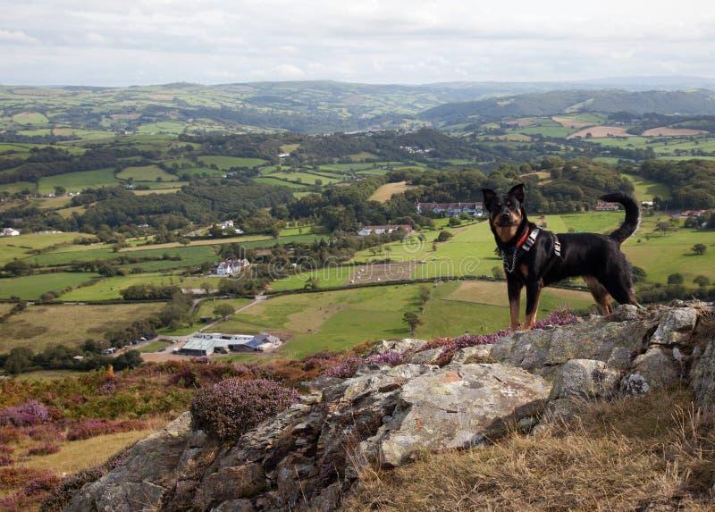 Valle di Conwy e un cane fotografia stock