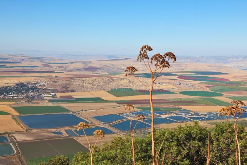 Valle di fioritura di Isreel nell'Israele immagini stock libere da diritti