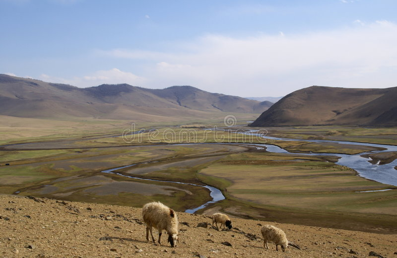 Valle en Mongolia con las ovejas foto de archivo