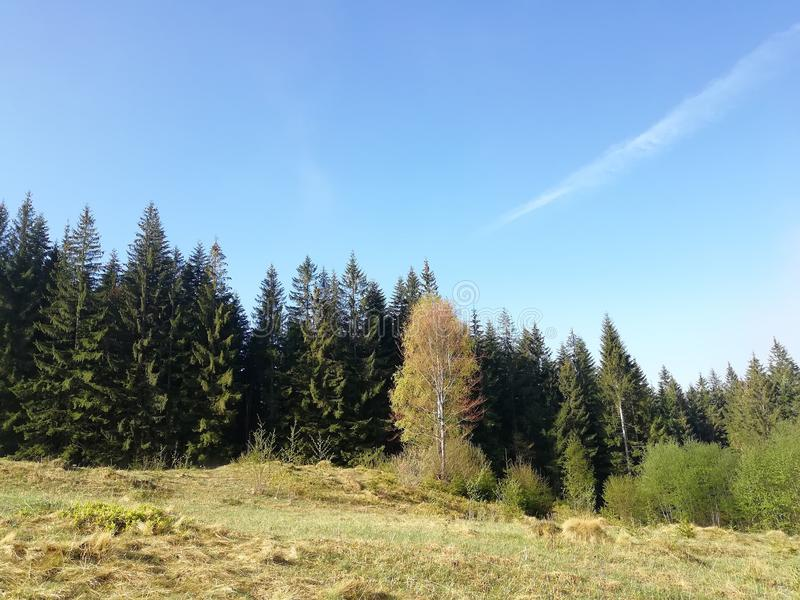 Valle en primavera imagen de archivo