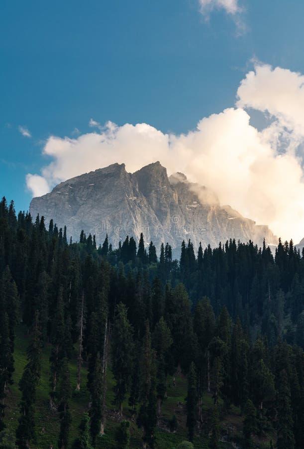 Valle escénico del bosque de la montaña y del pino con la nube blanca y el cielo azul en Sonamarg, Jammu y Cachemira, la India imágenes de archivo libres de regalías