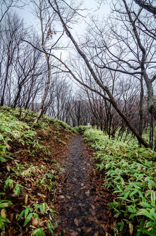 Valle hermoso de Jigokudani o del ` del valle del infierno del ` fotos de archivo