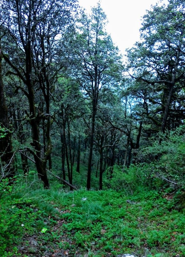 Valle Himachal Pradesh India di Jibhi immagini stock