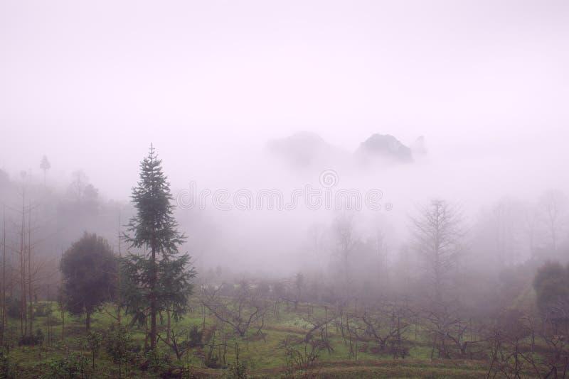 Valle nebbiosa immagini stock libere da diritti