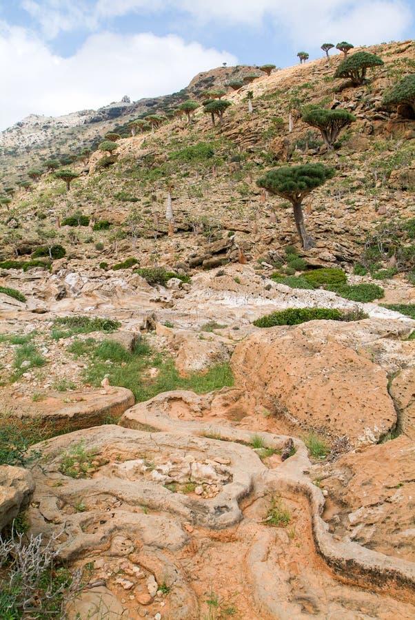 Valle nelle montagne al centro dell'isola di socotra immagini stock