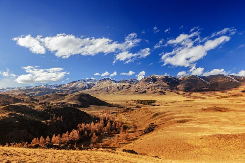 Valle ventosa selvaggia in Altai in primavera fotografia stock libera da diritti