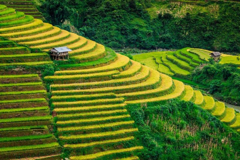 Valle Vietnam de las terrazas del arroz fotos de archivo libres de regalías
