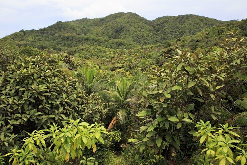 Vallee de Mai Nature Reserve em Praslin fotografia de stock