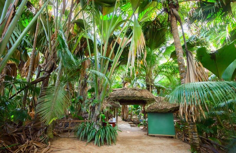 Valleen De Mai gömma i handflatan den skogMaj dalen, ön av Praslin, Seychellerna royaltyfri fotografi