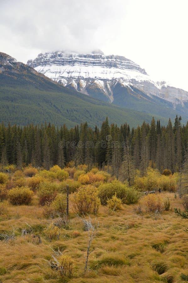 Vallei in Banff, Canada stock afbeeldingen