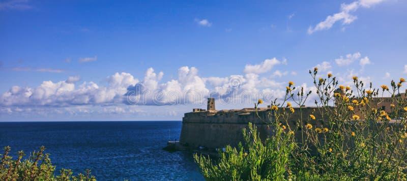 Valletta, Malta Chiuda sulla vista per ingiallire i fiori selvaggi, fortezza della sfuocatura e cielo e fondo del mare fotografia stock libera da diritti