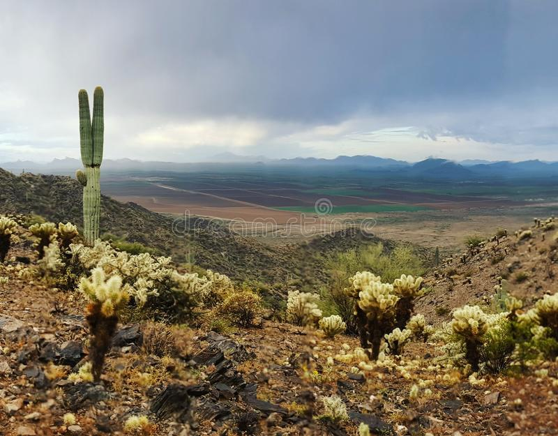 Valley in Arizona. Saguaro and Cholla royalty free stock photo