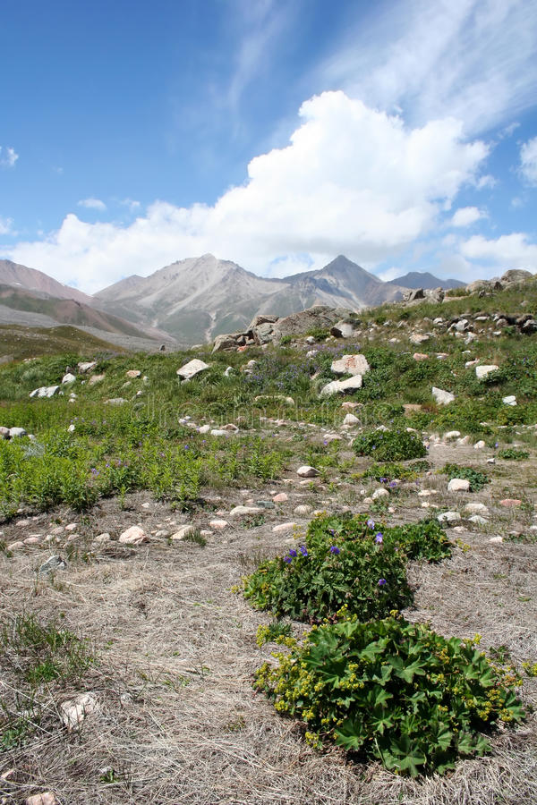 Valley with bushes in Tien Shan mountains royalty free stock photo