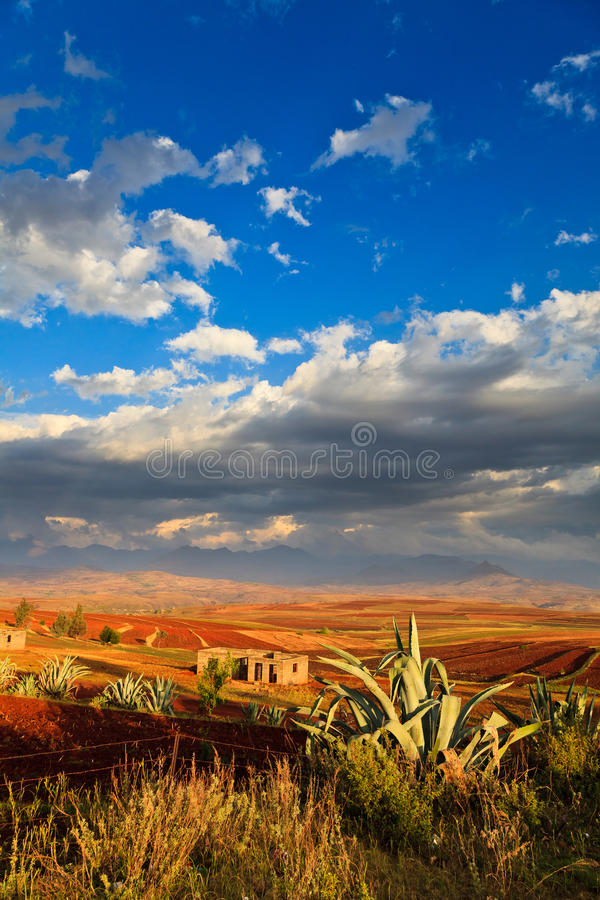 Valley with cactus in front lit by the sun. Valley with cactus in front lit by the evening sun stock image