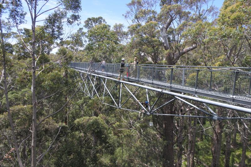 Valley of the Giants Tree Top Walk in Denmark Western Australia royalty free stock photography