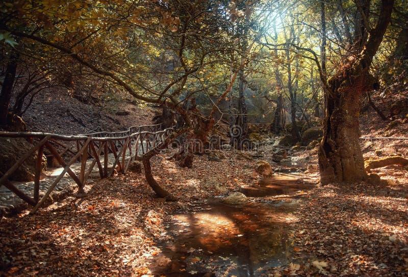 Valley i Butterflies Peta Loudhes Rhodes Greece Europe royaltyfria bilder