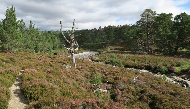 Valley of Lui Wter in Cairngorms National Park in Grampian Mountains in Scotland. In United Kingdom royalty free stock photo