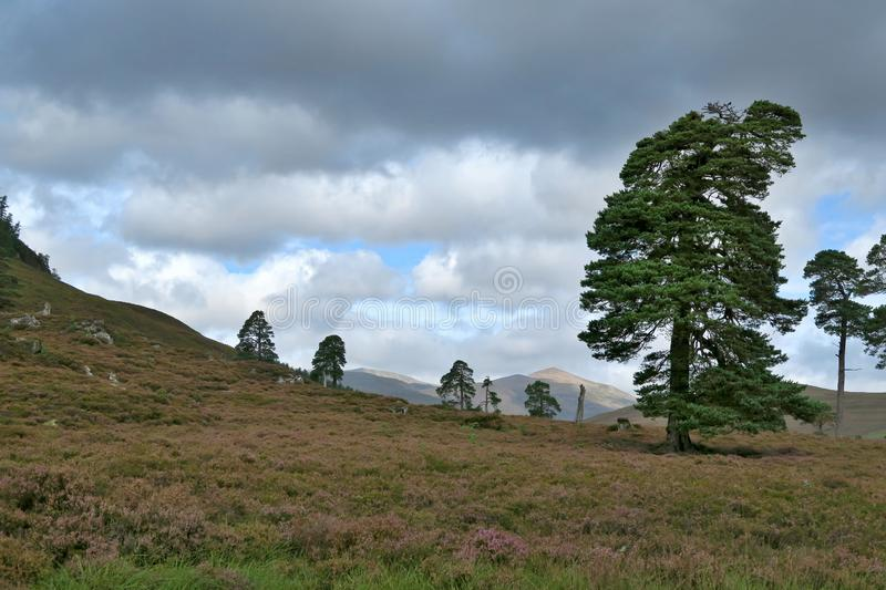Valley of Lui Wter in Cairngorms National Park in Grampian Mountains in Scotland. In United Kingdom stock photography
